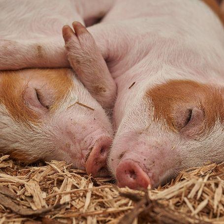 Erlebe den Bauernhof – Tiere streicheln & Hof kennenlernen